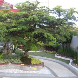 landscaping service from heide\'s bulaklak at iba pa